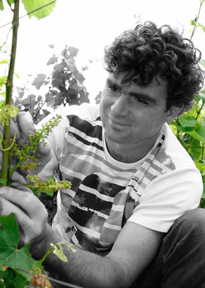 Nicolas Chauvet, The man of the vines
